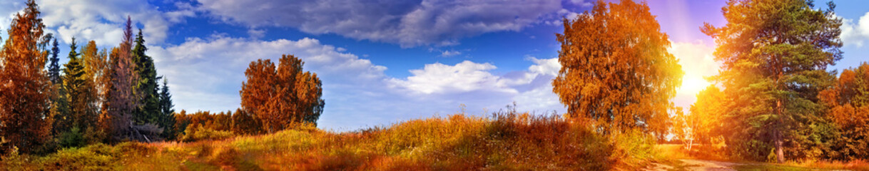 Autumn panoramic landscape with mixed forest