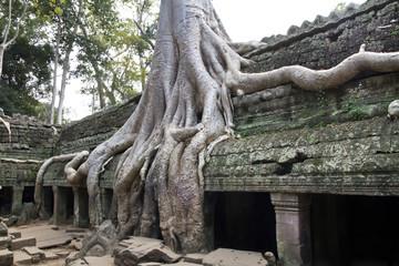 Angkor Thom tree root
