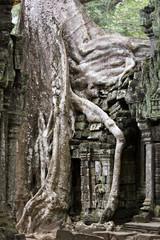 Angkor Thom overgrown