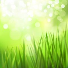 Meadow. Vector illustration.