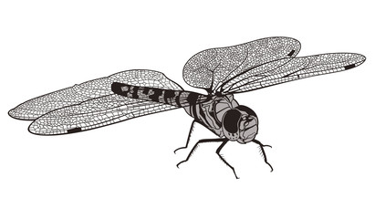 Vector Dragonfly