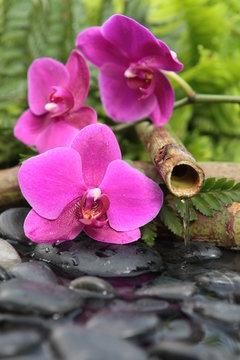 la source des fleurs