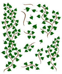 Leafy tree branches collection