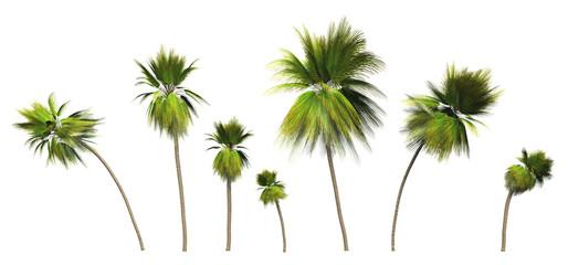 7x 3D Kokosnusspalmen freigestellt