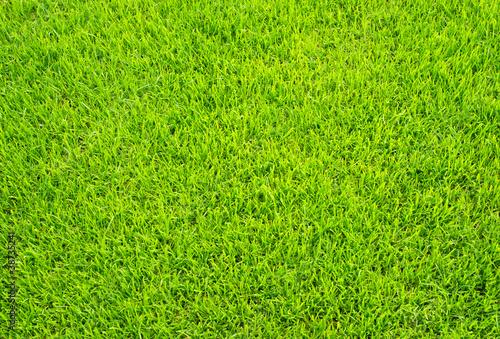 fussball rasen soccer grass stockfotos und lizenzfreie bilder auf bild 38735241. Black Bedroom Furniture Sets. Home Design Ideas