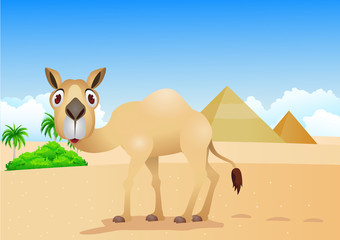 cartoon illustration of camel on desert