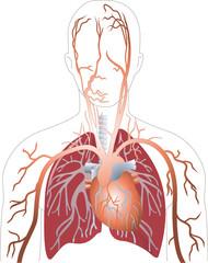 Herzl Lunge