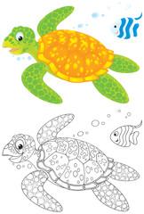 Marine turtle and fish