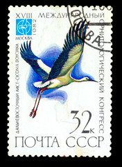 USSR - CIRCA 1982: stamp printed by USSR, shows bird Ciconia boy