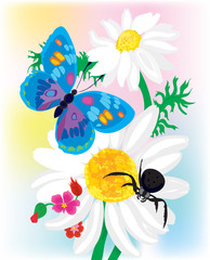 Bouquet of camomiles with the butterfly and a spider