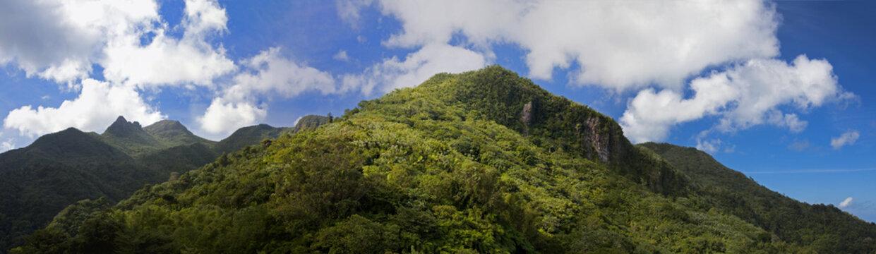 mountain vista in El Yunque Nation park, Puerto Rico
