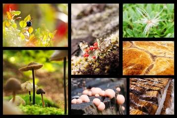 Nature Collage