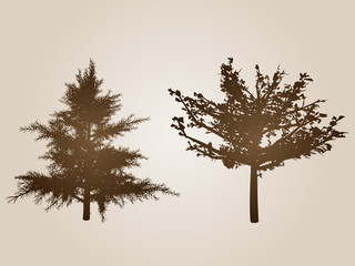 Vector vintage set of old trees isolated