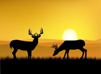 Deer In The Nature