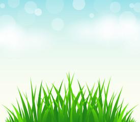 green grass,blue sky