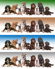 group of puppies on diverse gradient backgrounds