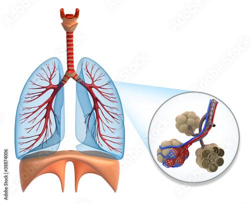 Как насытить мозг кислородом в домашних условиях