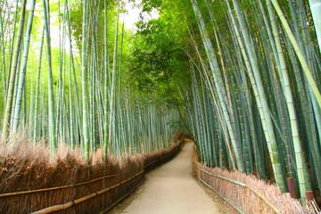 Foret de bambou à Kyoto