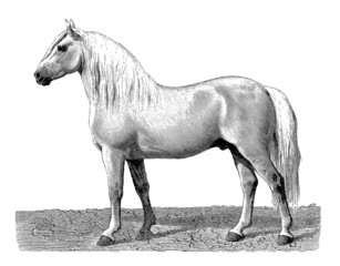 Photos illustrations et vid os de percheron - Dessin cheval de trait ...
