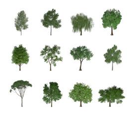 12 bäume freigestellt