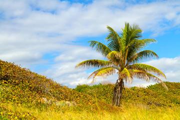 Palm Tree on Boca Raton Beach in Florida