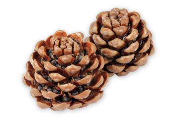 Pinienzapfen mit Samen, pine isolated