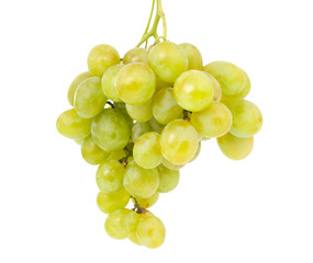 bunch of grapes isolated