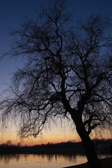 Tree by the lake at sunset