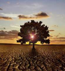 Single tree in a dry land with sunset behind