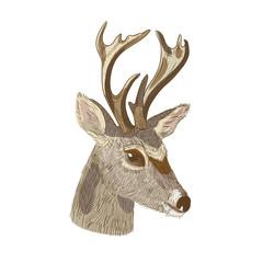 Sketch of deer head