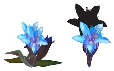 light blue flowers on white background