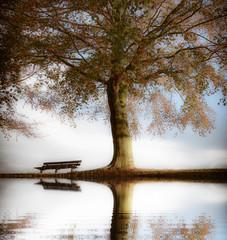 Fond de hotte en verre imprimé Bestsellers Old wooden bench in autumn park