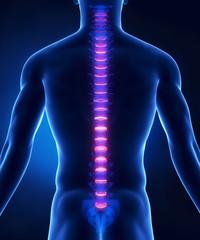 Backbone intervertebral disc anatomy posterior view