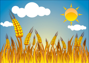 wheat on  blue sky background eps10