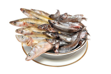 The frozen fish  on a plate