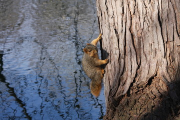Squirrel on tree over water