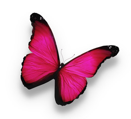 Bright pink butterfly, isolated on white