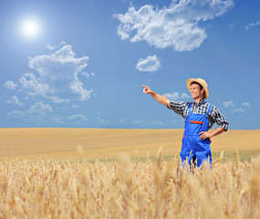 Young farmer pointing in a wheat field