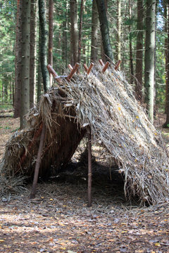 Survival Shelter in the forest