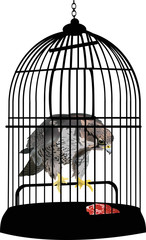 Wall Murals Birds in cages eagle in cage illustration