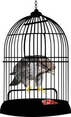 Printed roller blinds Birds in cages eagle in cage illustration