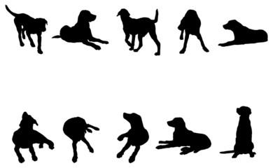 animal, le chien