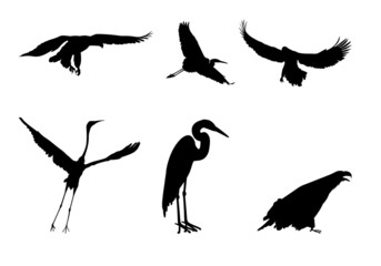 Silhouettes of the eagle and the stork