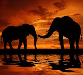 Foto op Aluminium Koraal silhouette elephant in the sunset