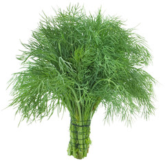 Tuinposter Palm boom Green dill isolated on white background. Studio macro