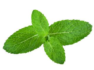 Fresh mint leaves isolated on white background. Studio macro