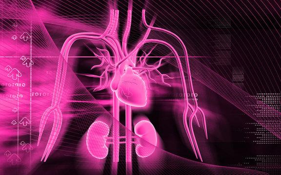 heart, kidney  and nerves