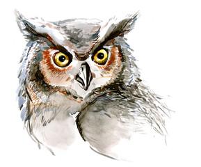 owl (series C)