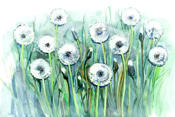 dandelions (series C)