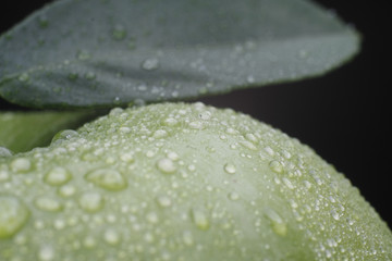 macro of green leaves with water drops